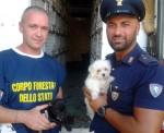 forestale venezia salva 106 cuccioli
